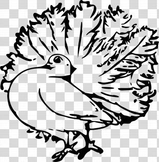 Homing Pigeon English Carrier Pigeon Columbidae Clip Art - Pigeon Clipart PNG