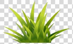 Grass Internet Media Type - Grass PNG