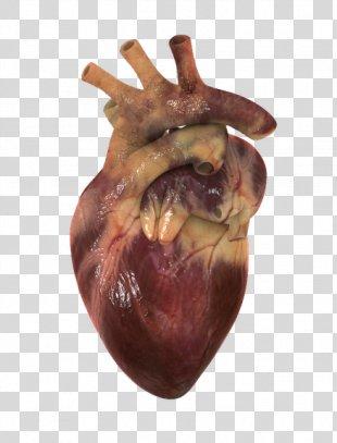 Human Heart Circulatory System 3D Computer Graphics Visualization - Heart PNG