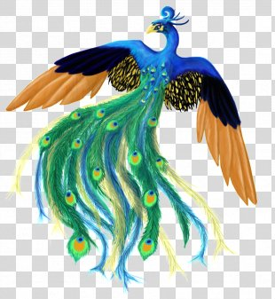 Feather Bird Peafowl Clip Art - Peacock PNG
