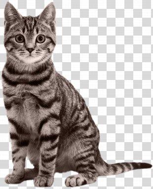 Cat Kitten Black Panther Felidae - Cat PNG