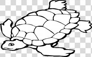 Sea Turtle Background - Sea Turtle Plant PNG
