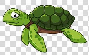 Green Sea Turtle Vector Graphics Clip Art - Sea Turtle PNG
