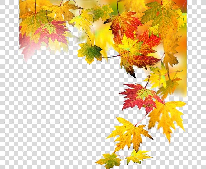 Autumn Leaf Computer File, Autumn Elements PNG