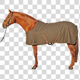 Horse Blanket Equestrian Horse Tack - Horse PNG