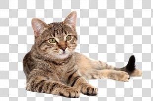 Cat Food Dog Pet Food - Cat PNG
