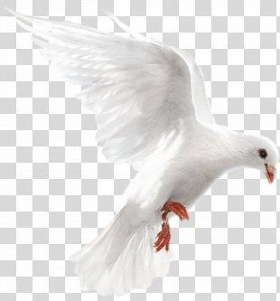 Columbidae Homing Pigeon Bird Release Dove Doves As Symbols - Bird PNG