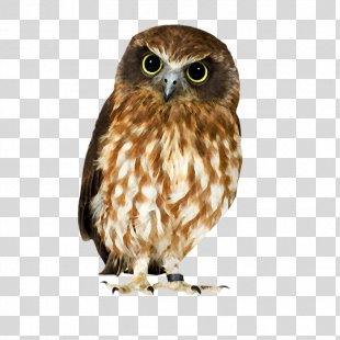 Owl Hawk Strix Newarensis Falcon Our Feathered Friends - Owl PNG