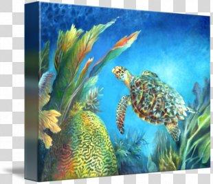 Sea Turtle Coral Reef Fish Marine Biology Ecosystem - Hawksbill Sea Turtle PNG