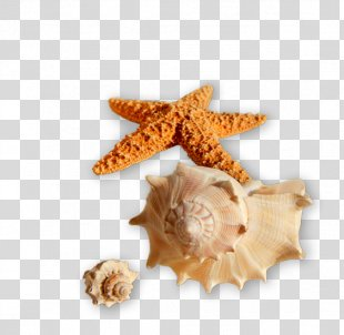 Seashell Image Clip Art Clam - Seashell PNG