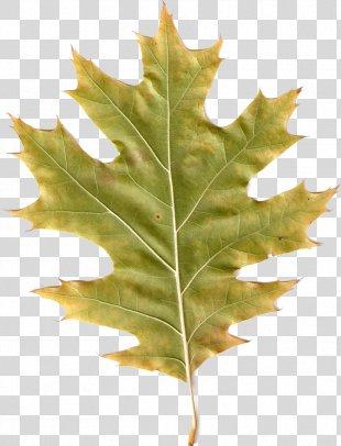 Autumn Leaves Leaf PhotoScape - Autumn Leaves PNG