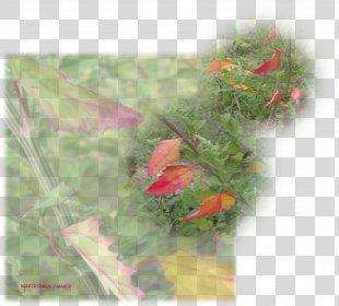 Leaf Orange S.A. - Fall Leaves PNG