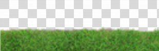Grass Lawn Photography - Grass PNG
