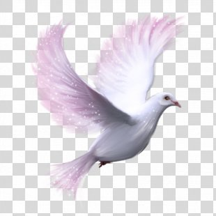Columbidae Homing Pigeon Bird Clip Art - Bird PNG