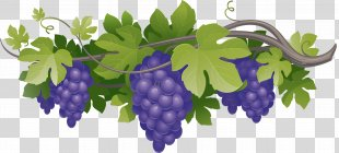 Red Wine Wine Clubs Wine Cellar Wine Of The Month Club - Grapes PNG