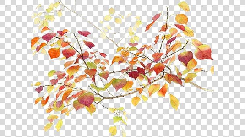 Autumn Icon, Hand-drawn Autumn Elements PNG