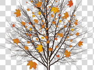 Stock.xchng Image Clip Art Stock Photography - Autumn PNG