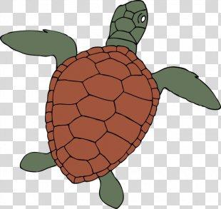 Sea Turtle Background - Box Turtle Hawksbill Sea Turtle PNG