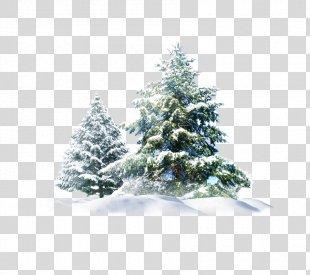 Polar Bear Snow Pine Wallpaper - Christmas Snow Tree Creative PNG