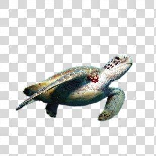 Sea Turtle Reptile World Turtle Day - Sea Turtle PNG