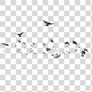 Bird Brusnitsyny Mansion - Birds PNG