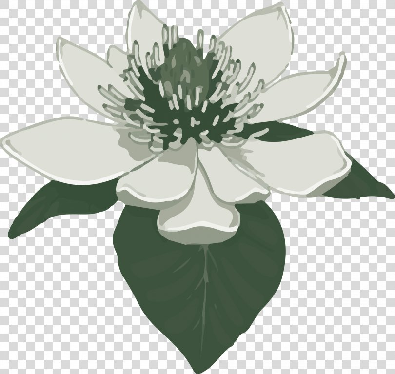 Southern Magnolia Clip Art, Magnolia PNG