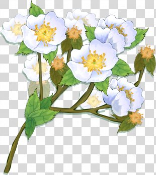 Picture Frames Flower Photography Clip Art - Flower PNG