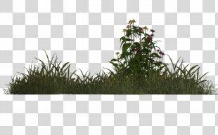Grass Plant Meadow .de Tree - Grass PNG