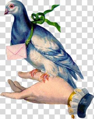Homing Pigeon English Carrier Pigeon Racing Homer Columbidae Bird - Pigeon PNG