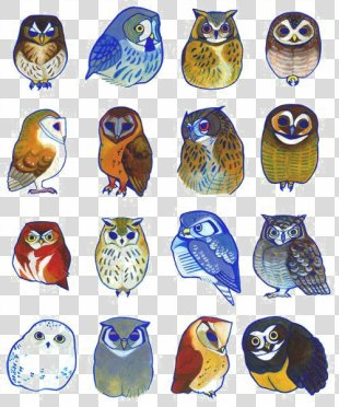 Owl Bird Drawing Illustration - Owl PNG