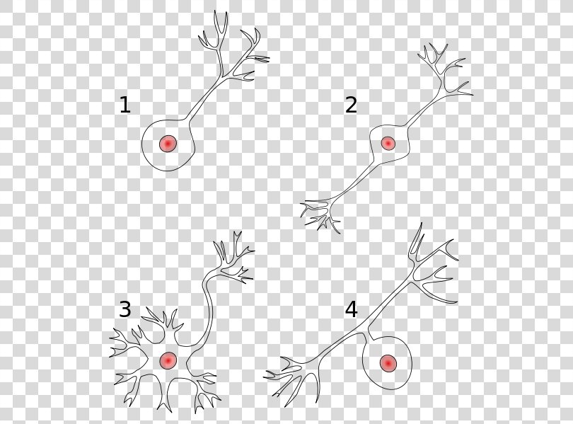 Bipolar Neuron Pseudounipolar Neuron Multipolar Neuron, Neurons PNG