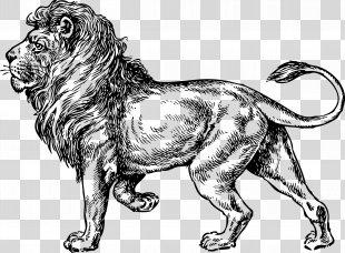 Lionhead Rabbit Tattoo Drawing Clip Art - Lion Drawing PNG