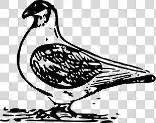 Columbidae Homing Pigeon Bird Clip Art - Luminescent Blue Glow Iris Can Be Modified PNG