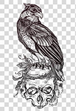 Bird Of Prey Owl Drawing Tattoo - Eagle Skull Illustrator Vector Material PNG