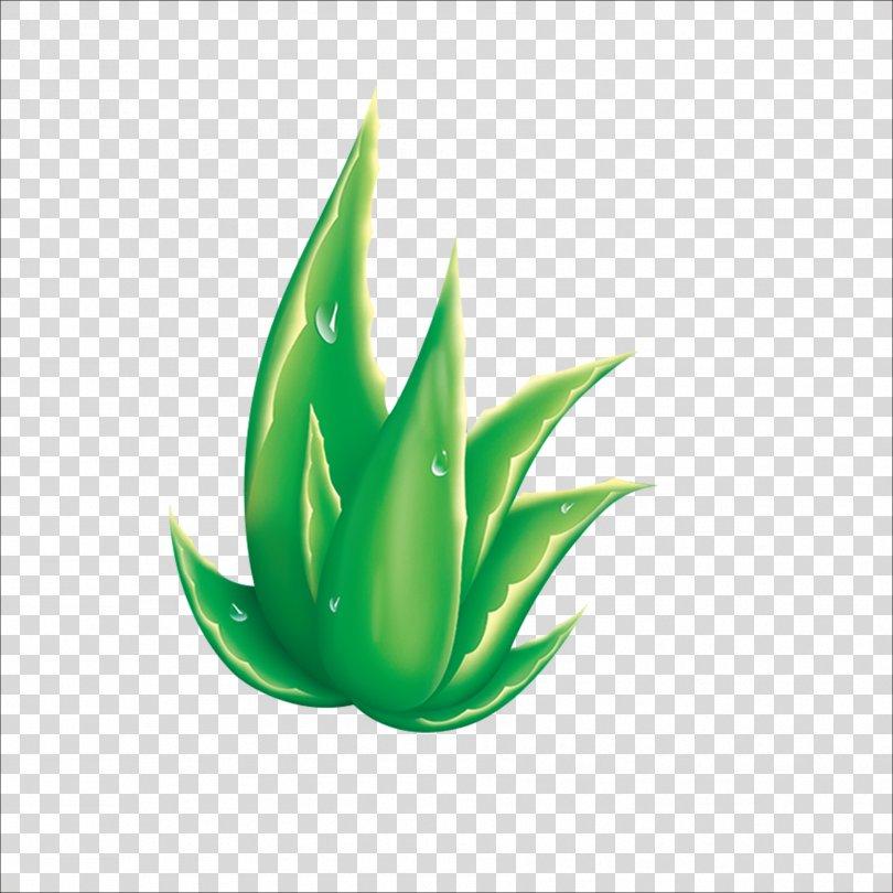 Aloe Raster Graphics, Aloe PNG