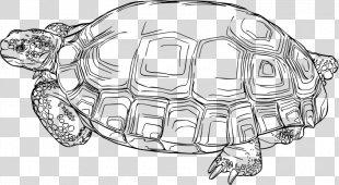 Sea Turtle Background - Common Snapping Turtle Loggerhead Sea Turtle PNG