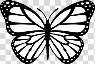 Butterfly Black And White Drawing Clip Art - Butterfly Clip Art PNG