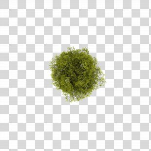 Tree Computer File - Tree Top View PNG