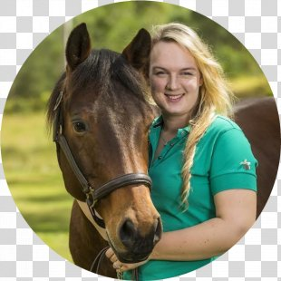 Horse Racing Pony Stallion Equestrian - Horse PNG