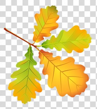 Autumn Leaves Leaf Drawing Tree - Autumn Leaves PNG