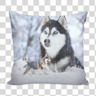 Siberian Husky Sakhalin Husky Alaskan Malamute Puppy Alaskan Klee Kai - Siberian Husky PNG