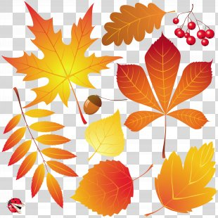 Autumn Leaves Drawing - Autumn Leaves PNG
