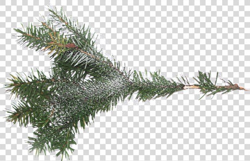 Tree Branch Spruce Clip Art, Branch PNG