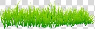 Grass Lawn - Grass PNG