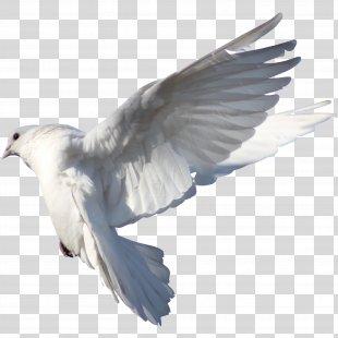 Homing Pigeon Columbidae Bird Typical Pigeons Drug - Pigeon PNG