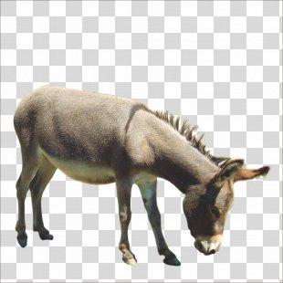Donkey Horse Painting - Donkey PNG