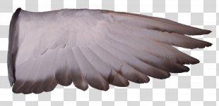 Columbidae Racing Homer Homing Pigeon Wing Bird - Pigeon PNG