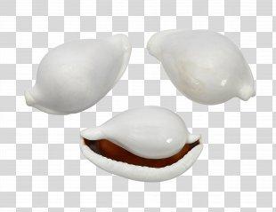 Seashell Cowry Shankha Ovula Ovum Jewellery - Seashell PNG