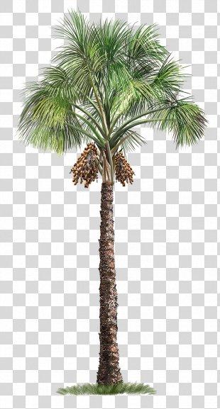 Mauritia Flexuosa Arecaceae Tree - Palm Tree PNG