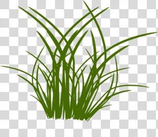 Grass Drawing Flower Blume - Grass PNG